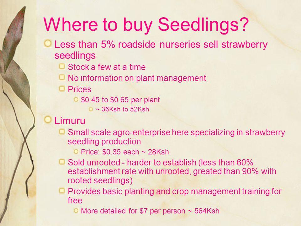 Where to buy Seedlings.