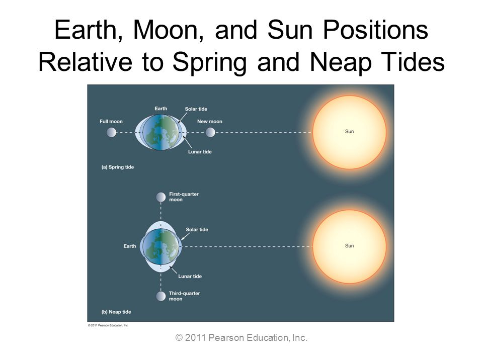 © 2011 Pearson Education, Inc. Earth, Moon, and Sun Positions Relative to Spring and Neap Tides