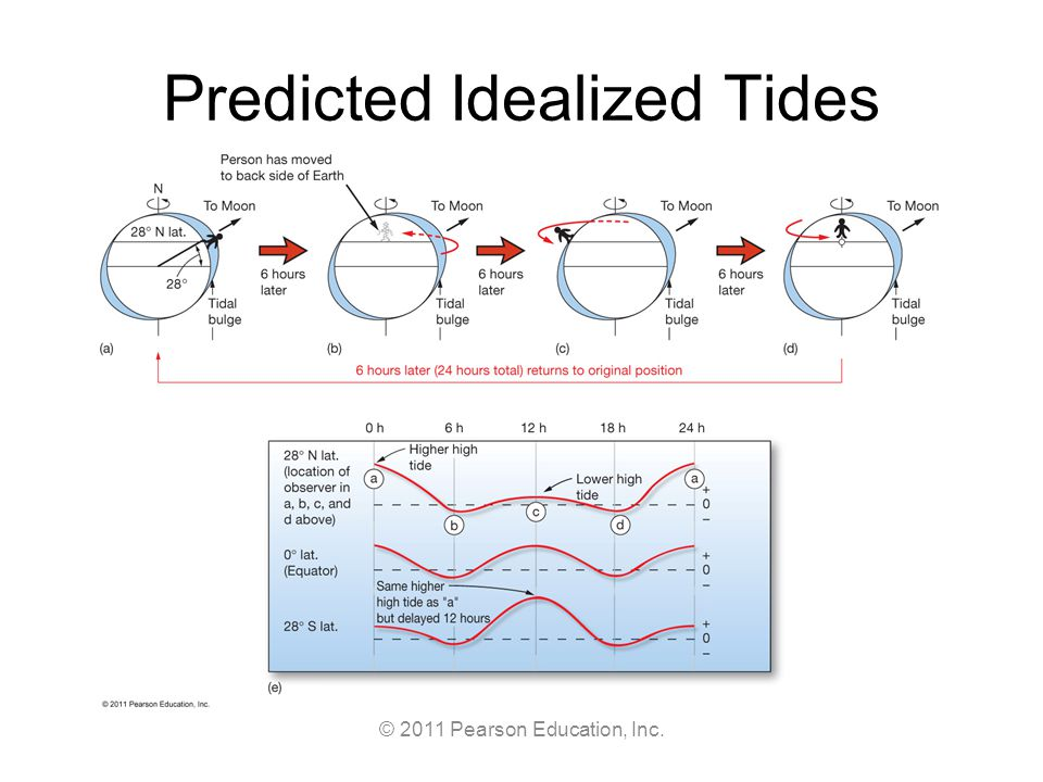 © 2011 Pearson Education, Inc. Predicted Idealized Tides