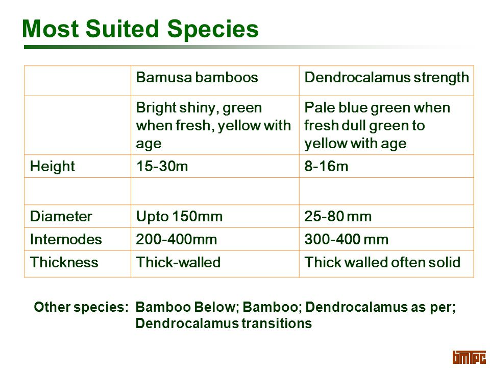 Most Suited Species Bamusa bamboosDendrocalamus strength Bright shiny, green when fresh, yellow with age Pale blue green when fresh dull green to yellow with age Height15-30m8-16m DiameterUpto 150mm25-80 mm Internodes200-400mm300-400 mm ThicknessThick-walledThick walled often solid Other species: Bamboo Below; Bamboo; Dendrocalamus as per; Dendrocalamus transitions
