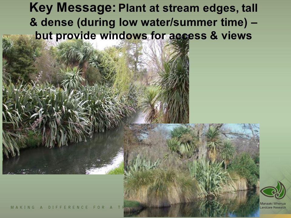 Key Message: Plant at stream edges, tall & dense (during low water/summer time) – but provide windows for access & views