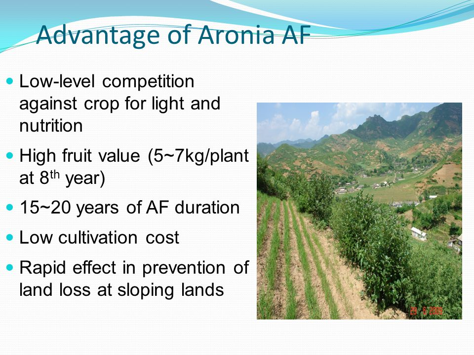 Advantage of Aronia AF Low-level competition against crop for light and nutrition High fruit value (5~7kg/plant at 8 th year) 15~20 years of AF duration Low cultivation cost Rapid effect in prevention of land loss at sloping lands