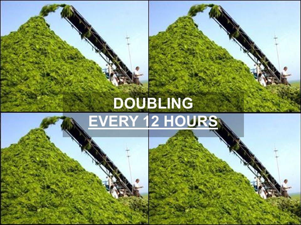 DOUBLING EVERY 12 HOURS