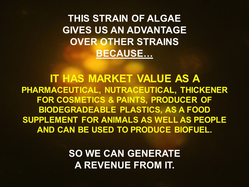 THIS STRAIN OF ALGAE GIVES US AN ADVANTAGE OVER OTHER STRAINS BECAUSE… IT HAS MARKET VALUE AS A PHARMACEUTICAL, NUTRACEUTICAL, THICKENER FOR COSMETICS & PAINTS, PRODUCER OF BIODEGRADEABLE PLASTICS, AS A FOOD SUPPLEMENT FOR ANIMALS AS WELL AS PEOPLE AND CAN BE USED TO PRODUCE BIOFUEL.