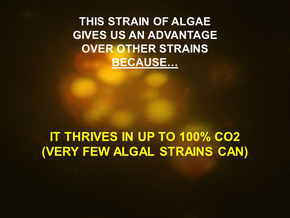 THIS STRAIN OF ALGAE GIVES US AN ADVANTAGE OVER OTHER STRAINS BECAUSE… IT THRIVES IN UP TO 100% CO2 (VERY FEW ALGAL STRAINS CAN)