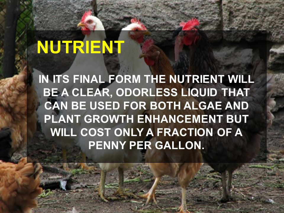 NUTRIENT IN ITS FINAL FORM THE NUTRIENT WILL BE A CLEAR, ODORLESS LIQUID THAT CAN BE USED FOR BOTH ALGAE AND PLANT GROWTH ENHANCEMENT BUT WILL COST ONLY A FRACTION OF A PENNY PER GALLON.