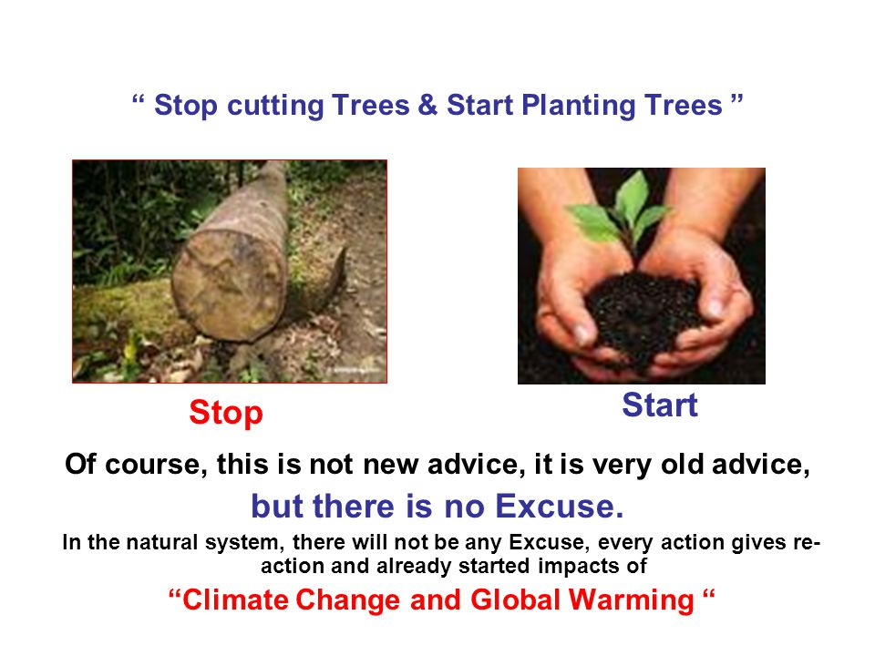 """ Stop cutting Trees & Start Planting Trees "" Of course, this is not new advice, it is very old advice, but there is no Excuse. In the natural system,"