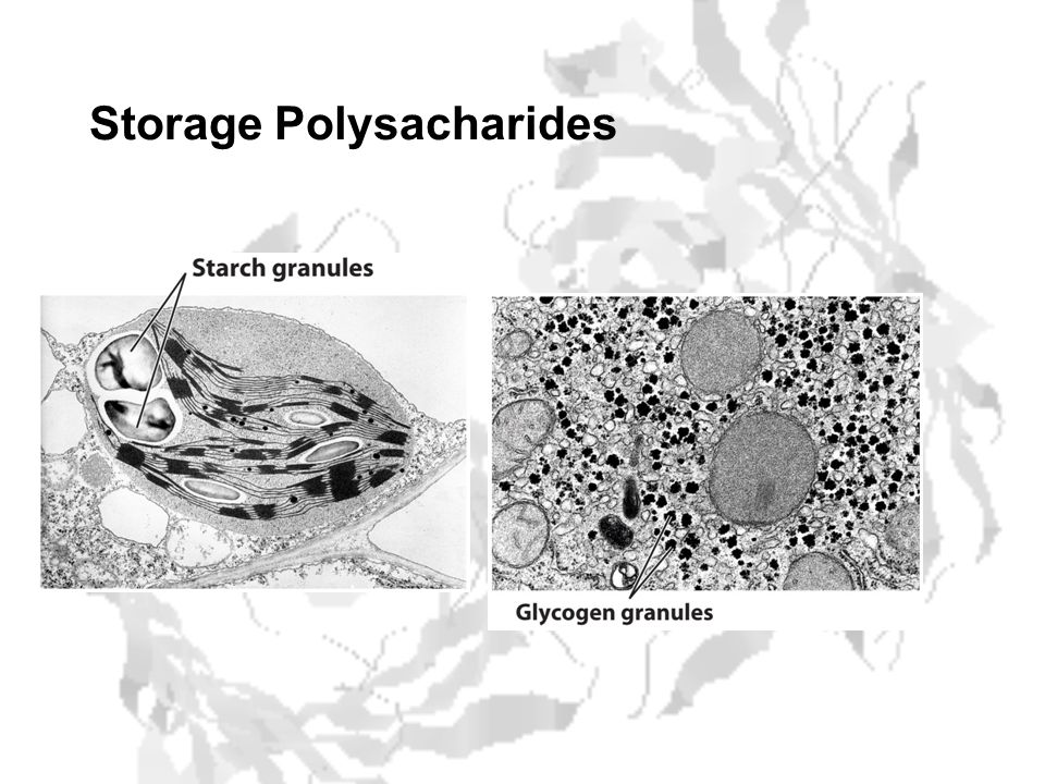 Storage Polysacharides