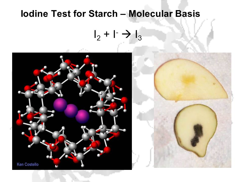 Iodine Test for Starch – Molecular Basis I 2 + I -  I 3