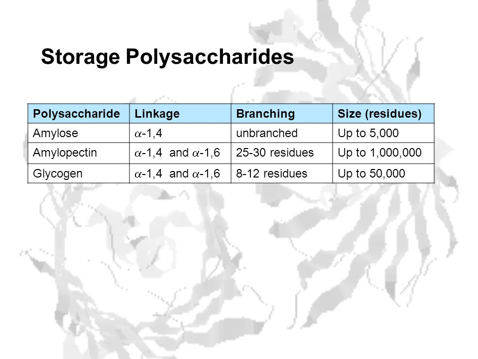 Storage Polysaccharides PolysaccharideLinkageBranchingSize (residues) Amylose  -1,4 unbranchedUp to 5,000 Amylopectin  -1,4 and  -1,6 25-30 residuesUp to 1,000,000 Glycogen  -1,4 and  -1,6 8-12 residuesUp to 50,000