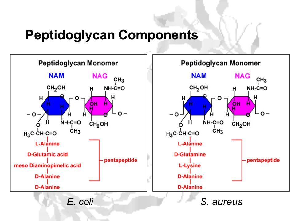Peptidoglycan Components E. coliS. aureus