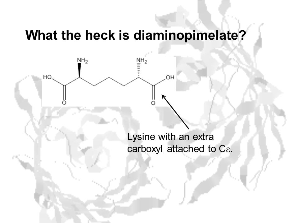 What the heck is diaminopimelate Lysine with an extra carboxyl attached to C .