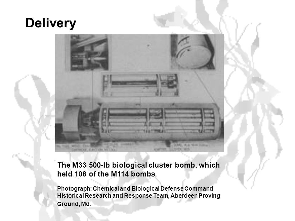 Delivery The M33 500-lb biological cluster bomb, which held 108 of the M114 bombs.