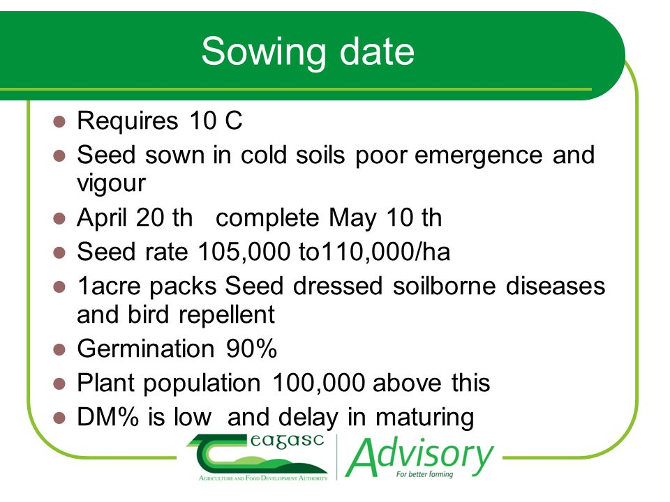 Sowing date Requires 10 C Seed sown in cold soils poor emergence and vigour April 20 th complete May 10 th Seed rate 105,000 to110,000/ha 1acre packs