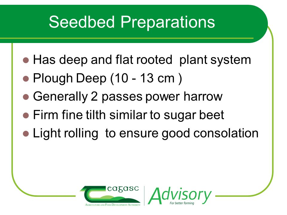 Seedbed Preparations Has deep and flat rooted plant system Plough Deep (10 - 13 cm ) Generally 2 passes power harrow Firm fine tilth similar to sugar