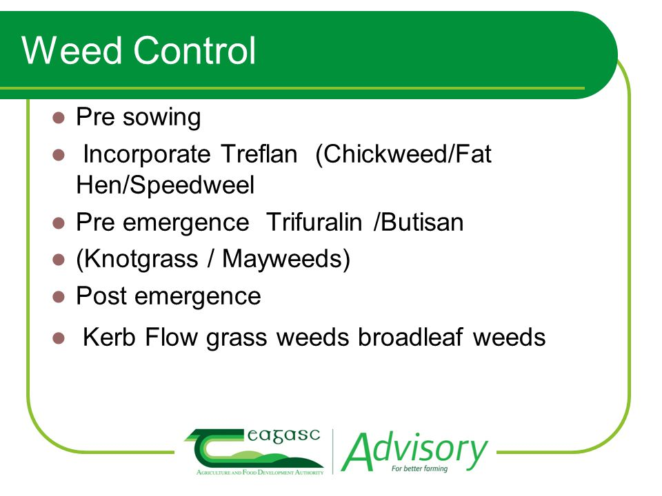 Weed Control Pre sowing Incorporate Treflan (Chickweed/Fat Hen/Speedweel Pre emergence Trifuralin /Butisan (Knotgrass / Mayweeds) Post emergence Kerb
