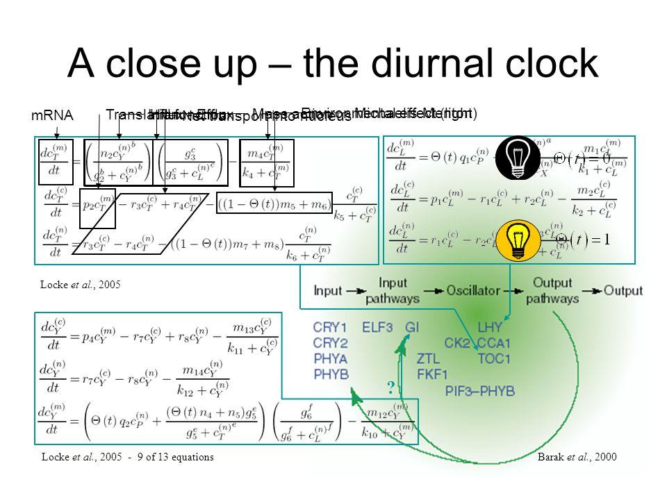 A close up – the diurnal clock Barak et al., 2000 Locke et al., 2005 - 9 of 13 equations ? Locke et al., 2005 Hill function Mass action Michaelis-Ment