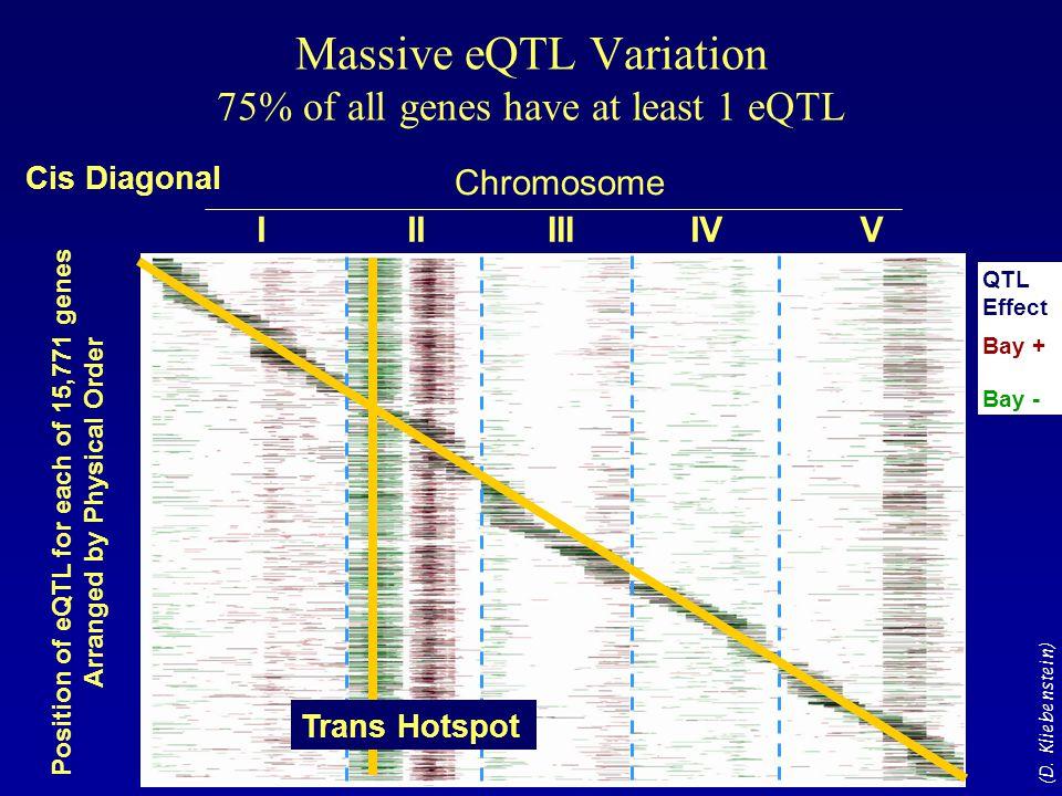 Massive eQTL Variation 75% of all genes have at least 1 eQTL IIIIIIIVV Chromosome Position of eQTL for each of 15,771 genes Arranged by Physical Order Bay + Bay - QTL Effect Cis Diagonal Trans Hotspot (D.