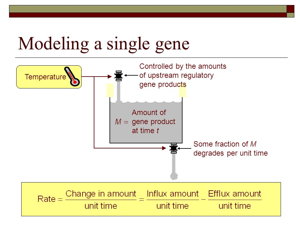 Modeling a single gene Amount of gene product at time t Controlled by the amounts of upstream regulatory gene products Some fraction of M degrades per