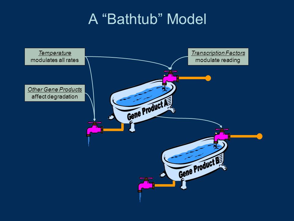 A Bathtub Model Transcription Factors modulate reading Temperature modulates all rates Other Gene Products affect degradation