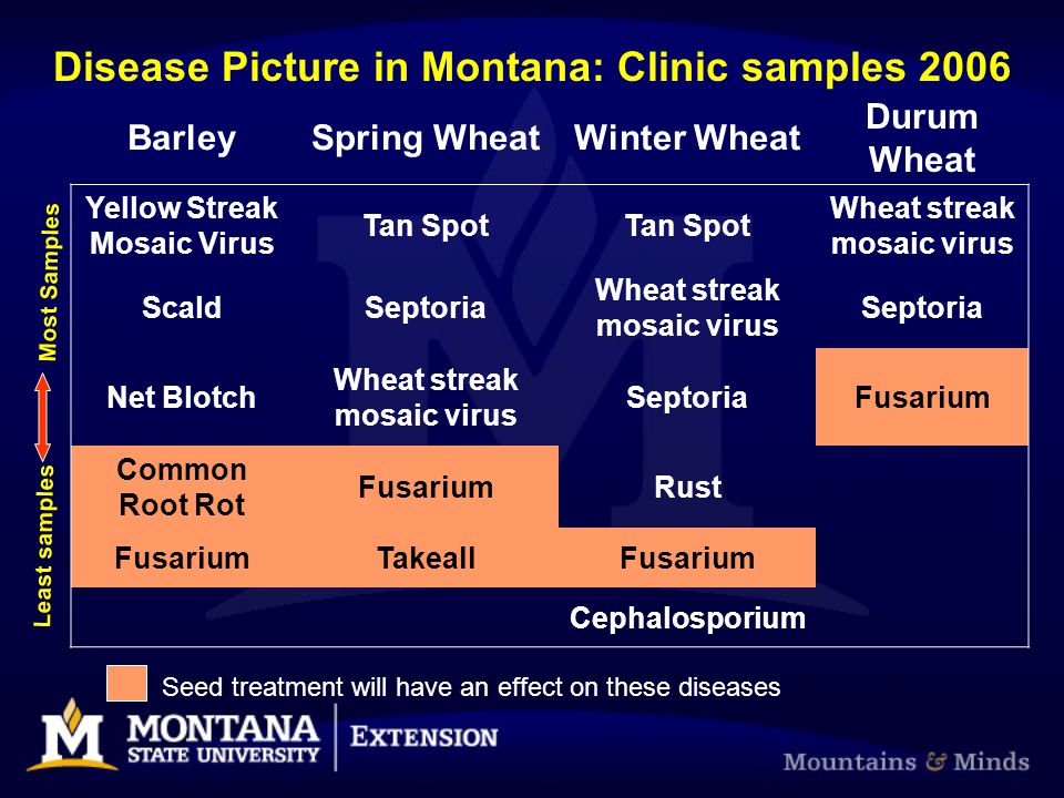 BarleySpring WheatWinter Wheat Durum Wheat Yellow Streak Mosaic Virus Tan Spot Wheat streak mosaic virus ScaldSeptoria Wheat streak mosaic virus Septo