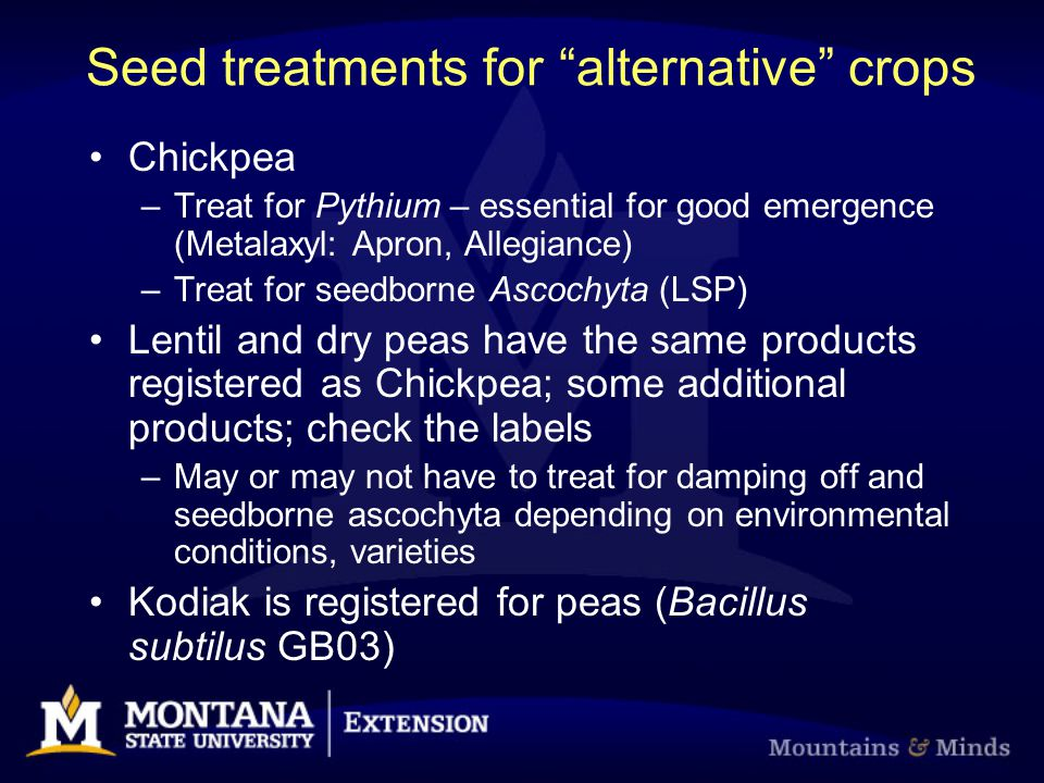 "Seed treatments for ""alternative"" crops Chickpea –Treat for Pythium – essential for good emergence (Metalaxyl: Apron, Allegiance) –Treat for seedborne"