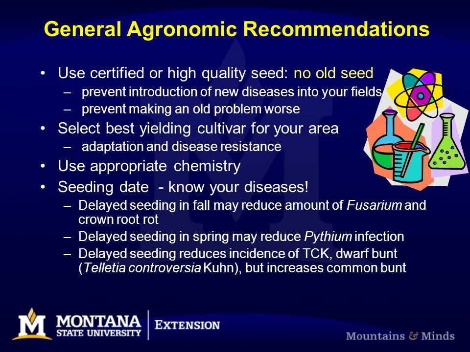 General Agronomic Recommendations Use certified or high quality seed: no old seed – prevent introduction of new diseases into your fields – prevent ma