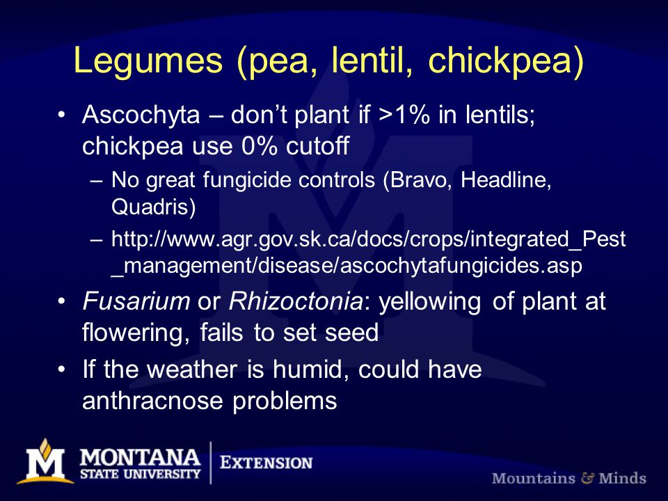 Legumes (pea, lentil, chickpea) Ascochyta – don't plant if >1% in lentils; chickpea use 0% cutoff –No great fungicide controls (Bravo, Headline, Quadr