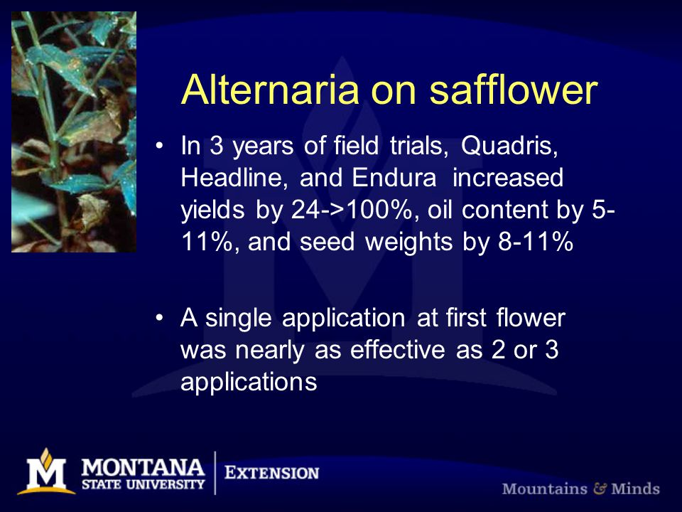 Alternaria on safflower In 3 years of field trials, Quadris, Headline, and Endura increased yields by 24->100%, oil content by 5- 11%, and seed weight