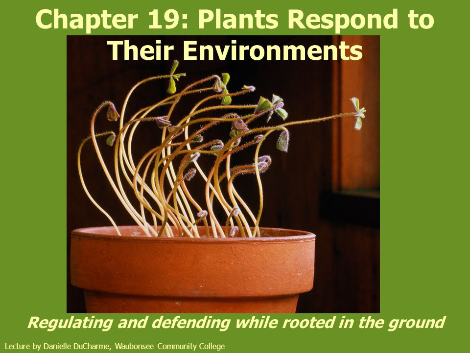 Chapter 19: Plants Respond to Their Environments Regulating and defending while rooted in the ground Lecture by Danielle DuCharme, Waubonsee Community