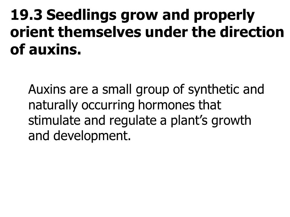 19.3 Seedlings grow and properly orient themselves under the direction of auxins. Auxins are a small group of synthetic and naturally occurring hormon