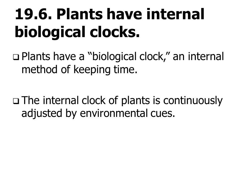 "19.6. Plants have internal biological clocks.  Plants have a ""biological clock,"" an internal method of keeping time.  The internal clock of plants i"