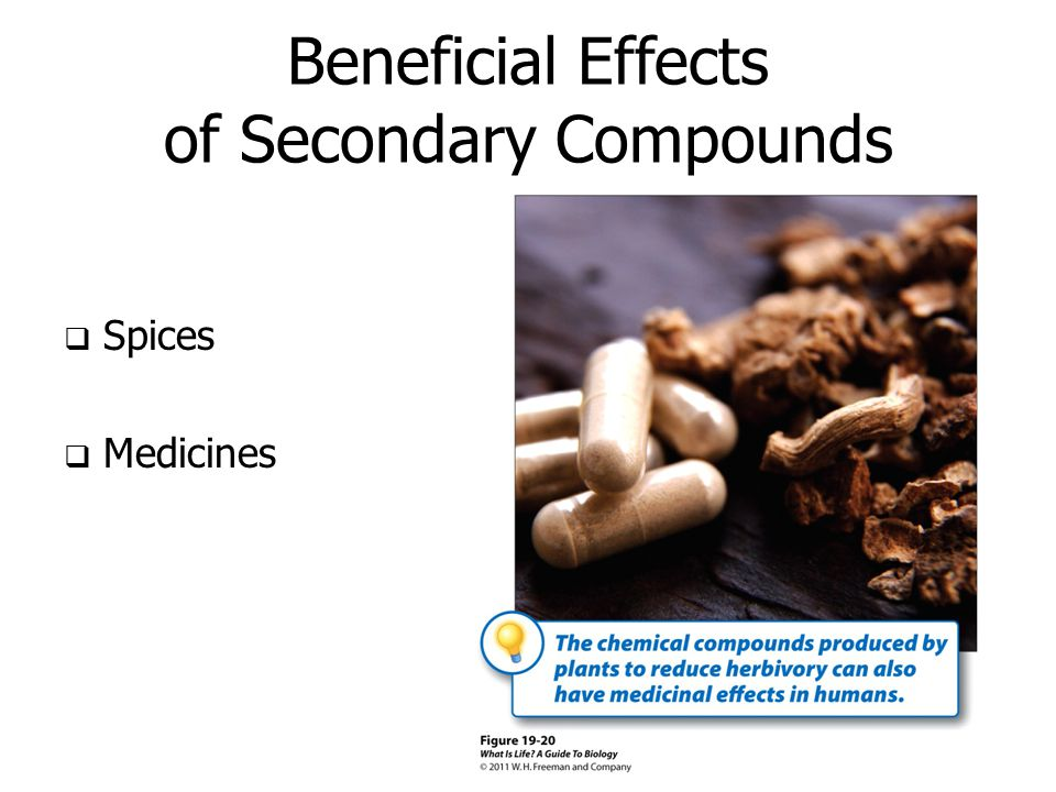Beneficial Effects of Secondary Compounds  Spices  Medicines