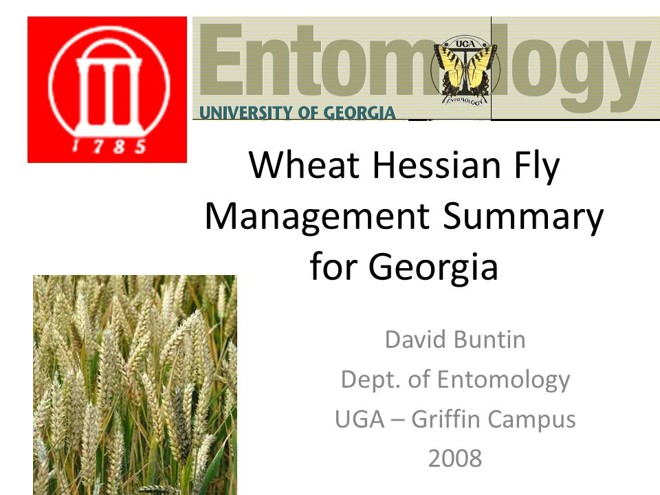Wheat Hessian Fly Management Summary for Georgia David Buntin Dept.