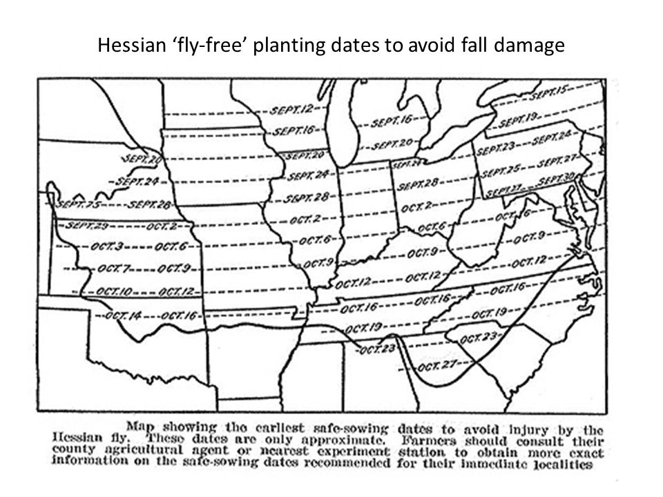 Hessian 'fly-free' planting dates to avoid fall damage