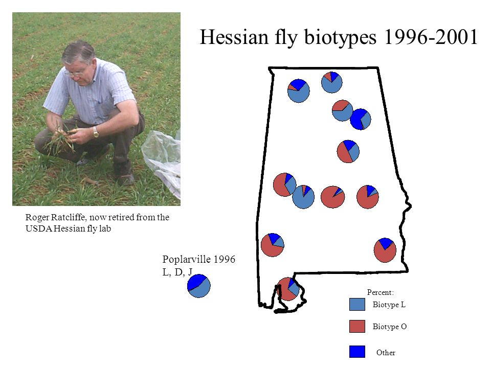 Other Biotype L Biotype O Percent: Poplarville 1996 L, D, J Roger Ratcliffe, now retired from the USDA Hessian fly lab Hessian fly biotypes 1996-2001