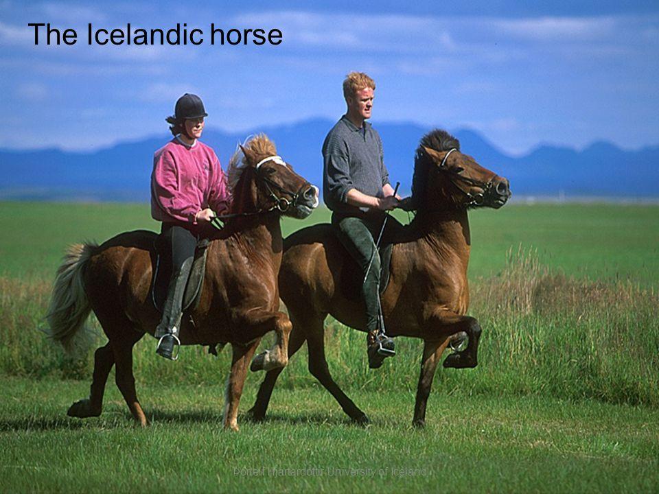The Icelandic horse Þórleif Hjartardóttir University of Iceland