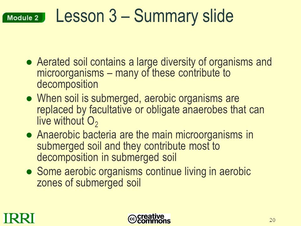 20 ●Aerated soil contains a large diversity of organisms and microorganisms – many of these contribute to decomposition ●When soil is submerged, aerob