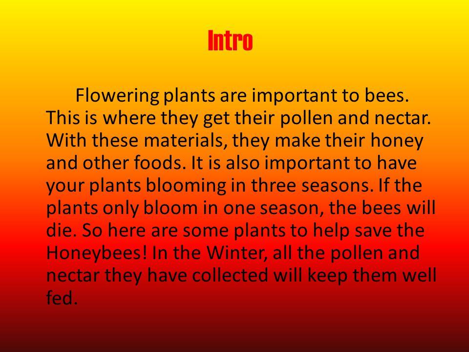 Bee Friendly Flowers By Keaton & Lucas The Garden Group