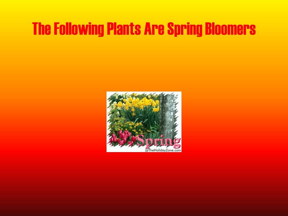 Sedum o Partial sun o Perennial o 2-24 inches tall o White, pink, red, yellow, orange o Plant in early summer
