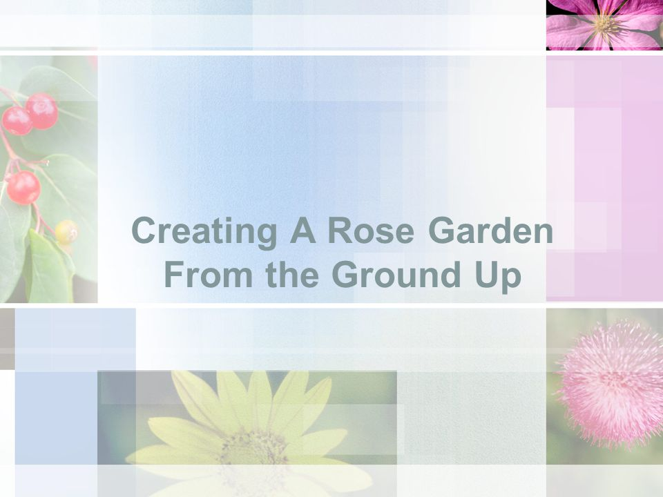 Creating A Rose Garden From the Ground Up