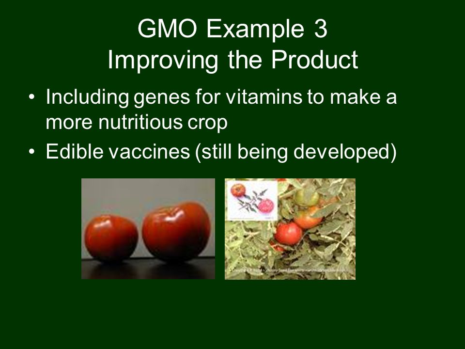 GMO Example 3 Improving the Product Including genes for vitamins to make a more nutritious crop Edible vaccines (still being developed)