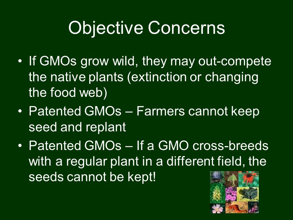 Objective Concerns If GMOs grow wild, they may out-compete the native plants (extinction or changing the food web) Patented GMOs – Farmers cannot keep seed and replant Patented GMOs – If a GMO cross-breeds with a regular plant in a different field, the seeds cannot be kept!
