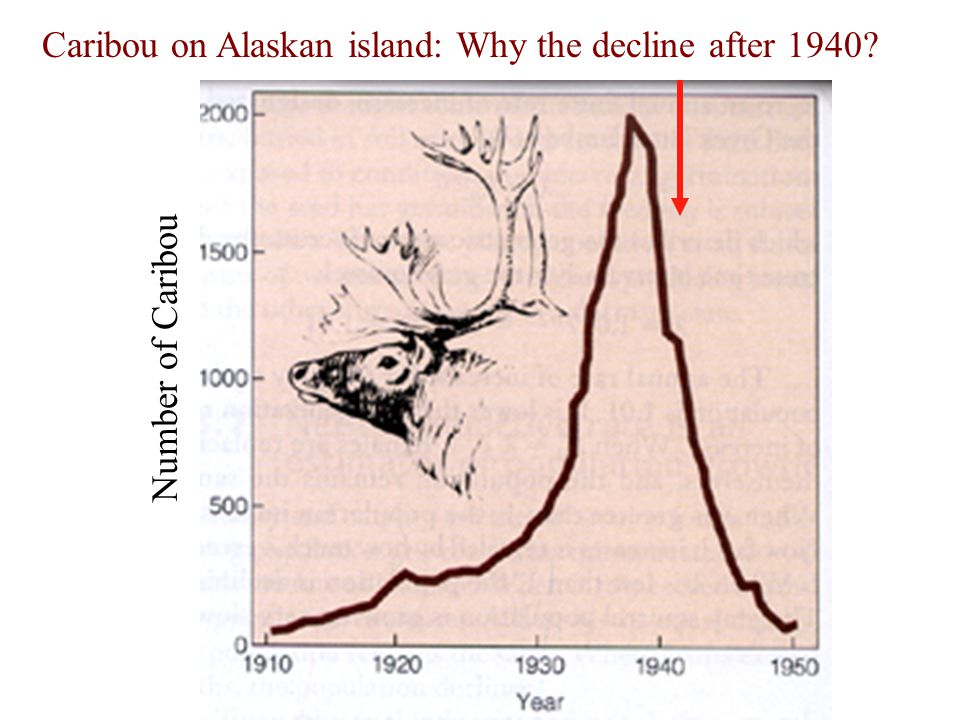 Number of Caribou Caribou on Alaskan island: Why the decline after 1940?