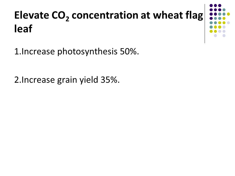 Elevate CO 2 concentration at wheat flag leaf 1.Increase photosynthesis 50%.