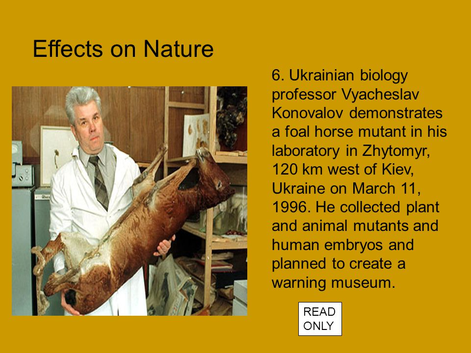 6. Ukrainian biology professor Vyacheslav Konovalov demonstrates a foal horse mutant in his laboratory in Zhytomyr, 120 km west of Kiev, Ukraine on Ma