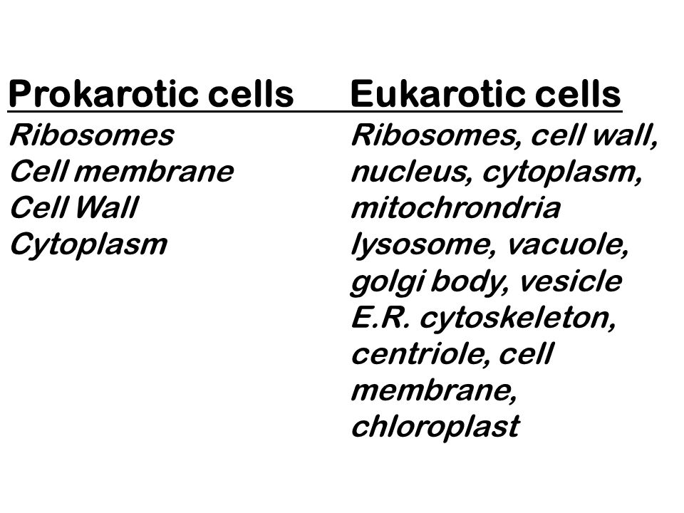 Prokarotic cellsEukarotic cells RibosomesRibosomes, cell wall, Cell membranenucleus, cytoplasm, Cell Wallmitochrondria Cytoplasmlysosome, vacuole, gol