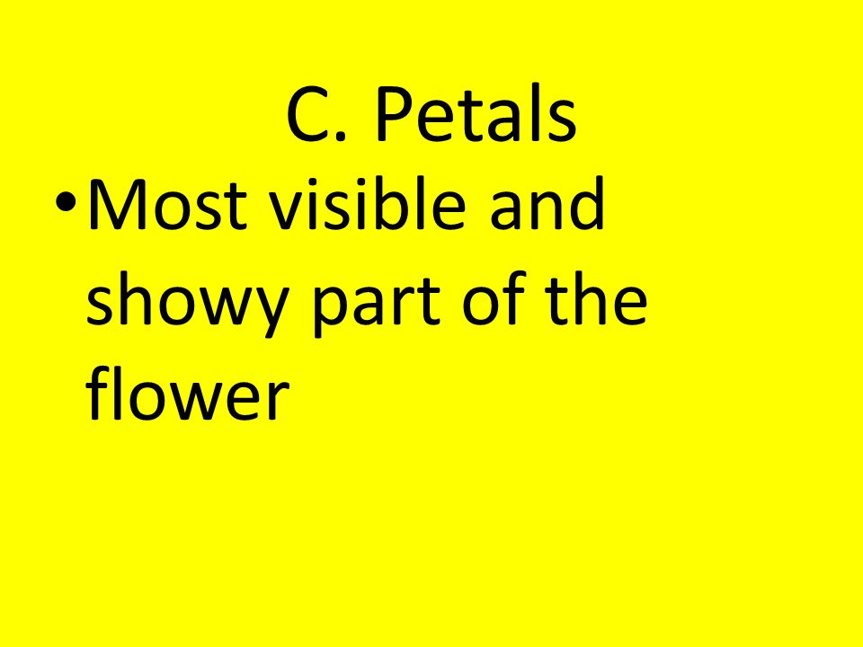 C. Petals Most visible and showy part of the flower
