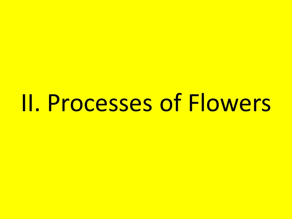 II. Processes of Flowers
