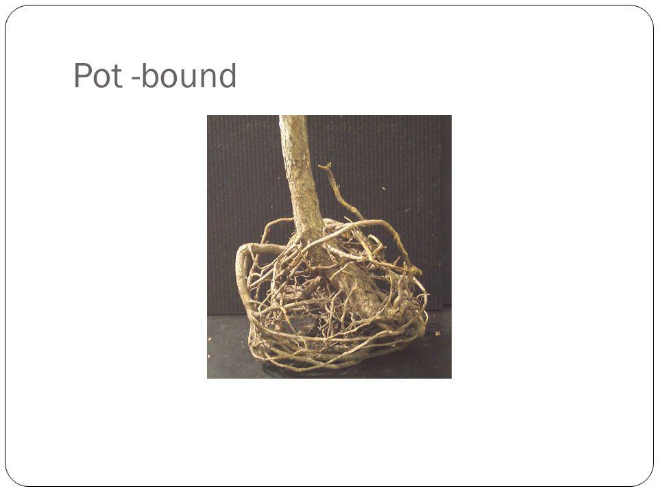 Pot -bound